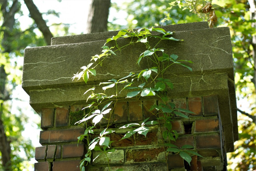Old brick pillars overgrown by weeds and vines on the Heritage Trail. (Brittany Carter/Niagara Now)